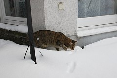 Cat (Emily) in the snow