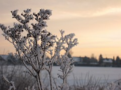 Hoar frost and snow